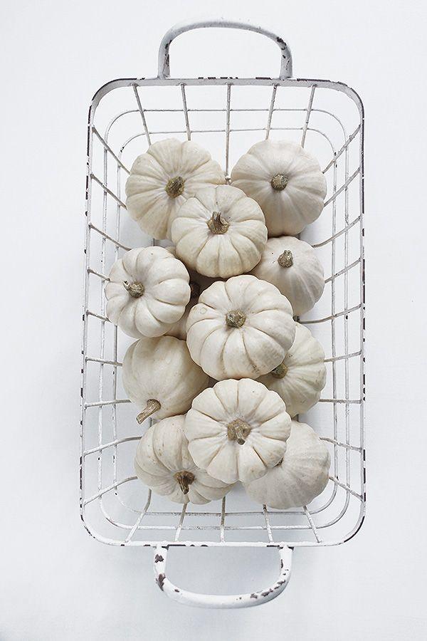 Mini white pumpkins for tables