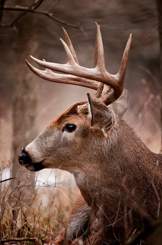720 best Drawing Ungulates images on Pinterest | Animal babies ...