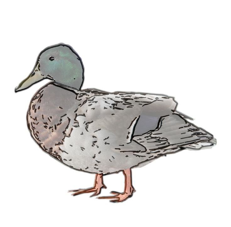 Woodland Series - Duck / I make it