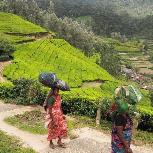 На индийской фабрике, которая производит ваш любимый чай в пакетиках http://www.vice.com/ru/read/inside-the-indian-factory-that-makes-your-favorite-tea-bags-149