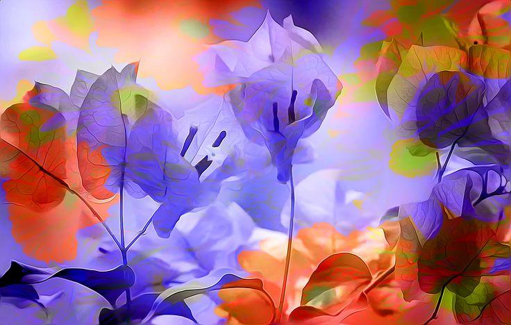 https://flic.kr/p/EK1AsZ | margaret's flowers | flic.kr/ps/ZwyK5