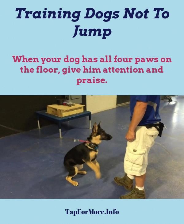 Stop Dog Jumping And Teach Dog Not To Jump Check The Picture For