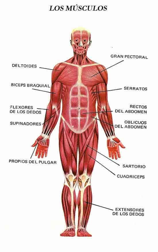 50 best cos huma images on Pinterest | Human body, Human anatomy and ...