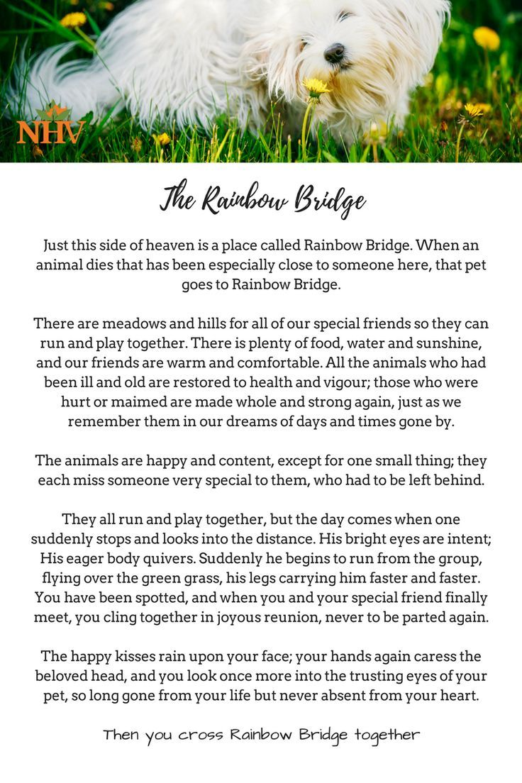 The Rainbow Bridge Is A Classic Poem About Cat And Doggie Heaven Written To Bring Comfort And Peace To The Heart Of A Pet Bereavement Rainbow Bridge Pet Loss