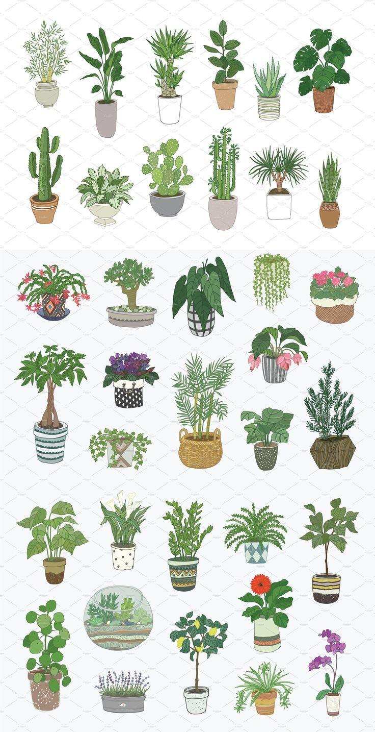Indoor Plants Vector Products Files Line Inspire Scetchbook En