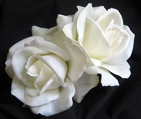 White Garden Rose Hair 56 best hair flowers / accessories images on pinterest | hair