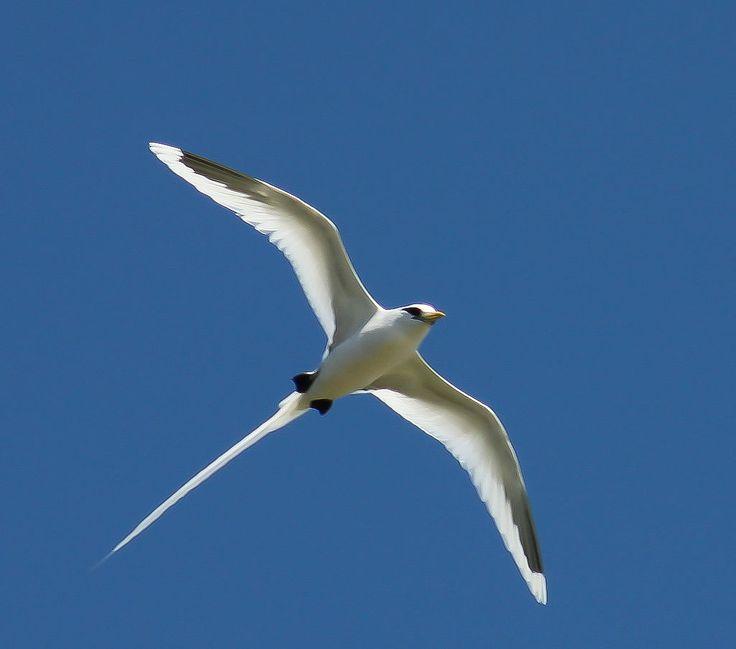 213 best BIRDS EURYPYGIMORPHAE a clade with SUNBITTERN KAGU