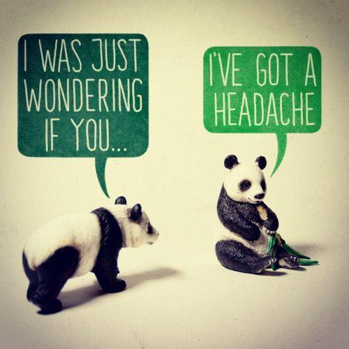 Never say no to a panda