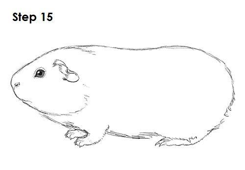 Guinea Pig 15 Animal Silhouettes