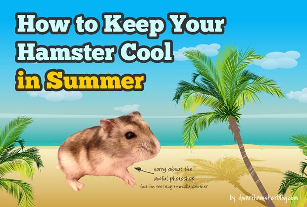 It gets really hot in summer (or all the time if you're in the tropics) and unless you have air-conditioning in your home and can have it on all the time, chances are your hamster's getting really bothered by the heat too. If temperatures go up high enough, your hamster may even …
