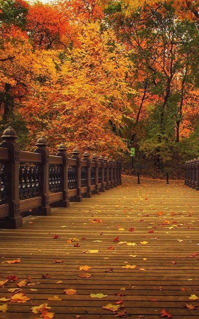 Central Park ~ Manhattan, N.Y.