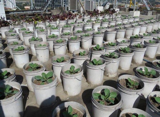 Las verduras se plantaron en los contenedores de plástico recicladas y cubos (Foto: Stéphanie Durante)