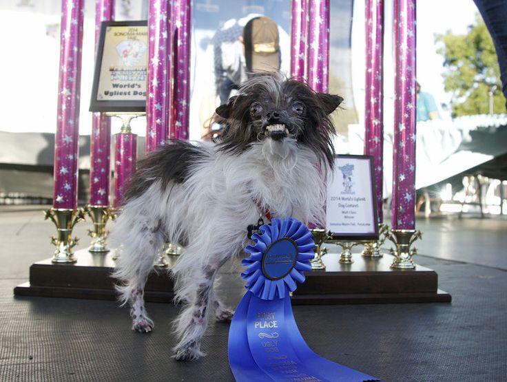 "Meet Peanut, The New ""World's Ugliest Dog"""