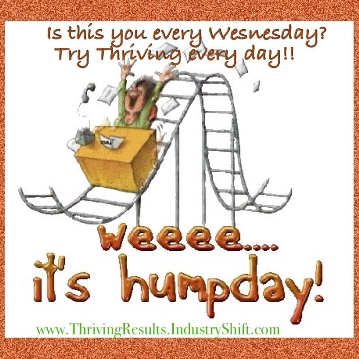 Best Hump Day Quotes: 142 Best Images About Hump Day! On Pinterest