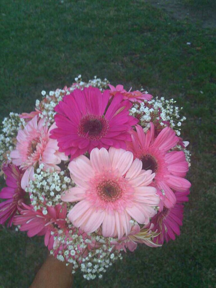 Red Gerbera Daisy Centerpiece : Gerbera daisies with different shades of pink baby s