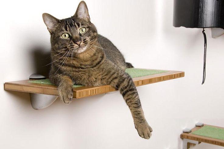 ВСЕ ПРО КОШЕК: Лежанки или мебель для кошек