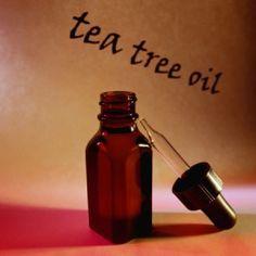 Make Tea Tree Oil Shampoo for Dogs