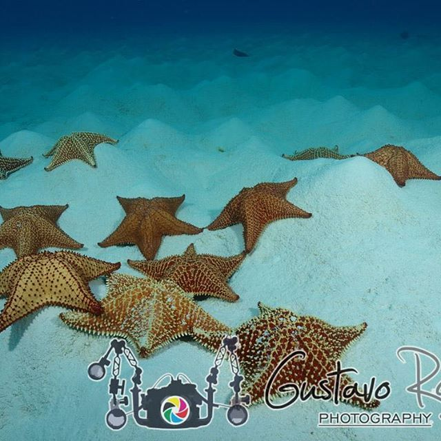 STARFISH. They form one of the most well-known groups of ...