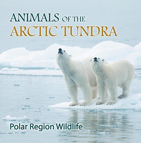 an overview of arctic tundra areas Overview of key wilderness laws  this act initially protected 54 wilderness areas (91 million acres) by withdrawing them from standard multiple use management and.