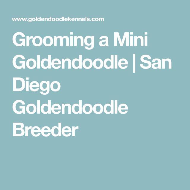 Grooming a Mini Goldendoodle | San Diego Goldendoodle Breeder