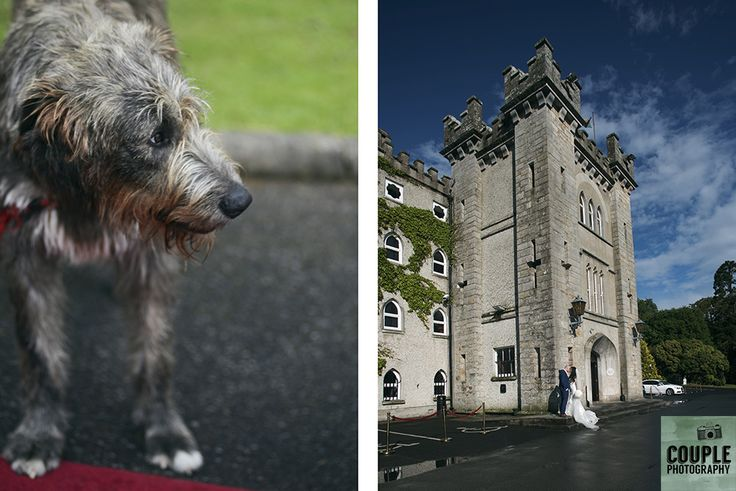 One of the resident Irish Wolfhounds and the bride & groom outside the castle. Weddings at Cabra Castle photographed by Couple Photography.