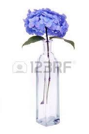 image hydrangea - Google Search