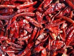 Drying hot peppers - for the ridiculous amount of chili peppers we have growing