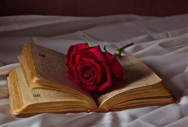 أجمل 40 خلفية عالية الدقة للورد الاحمر مداد الجليد Red Roses Wallpaper Red Roses Rose Wallpaper