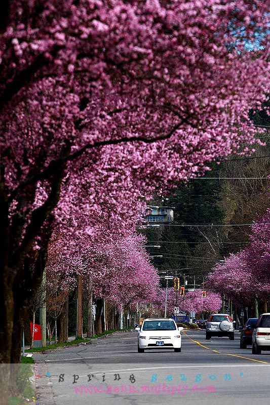 spring coming - Chilliwack, British Columbia
