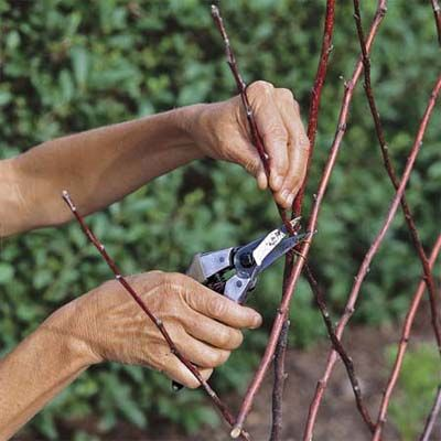 How to make a garden trellis out of sticks & small, lean branches ~ way cool! thisoldhouse.com