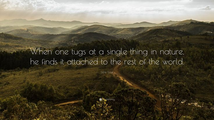 """John Muir Quote: """"When one tugs at a single thing in nature, he finds it attached to the rest of the world."""""""