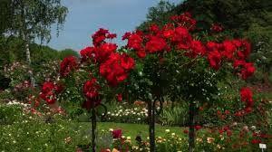 Bildergebnis für blumengarten