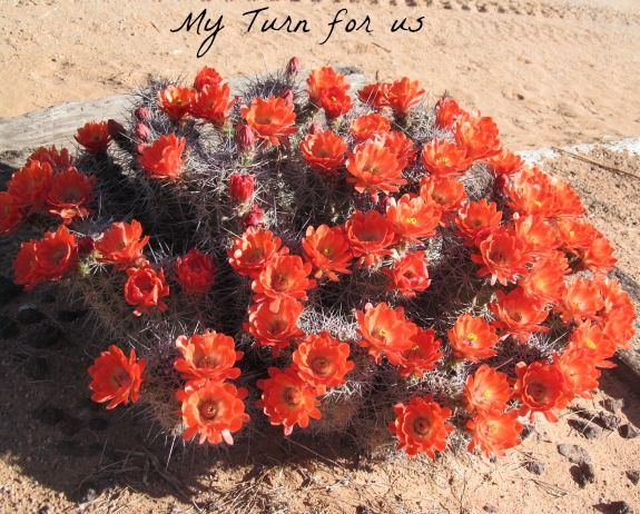 My Turn (for us): Desert Cactus