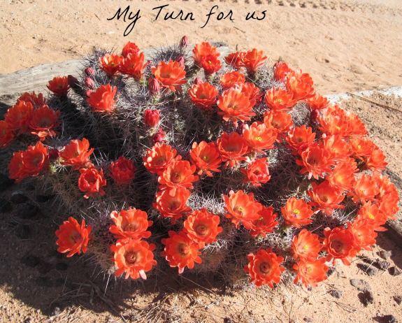 My Turn (for us): Desert Cactus