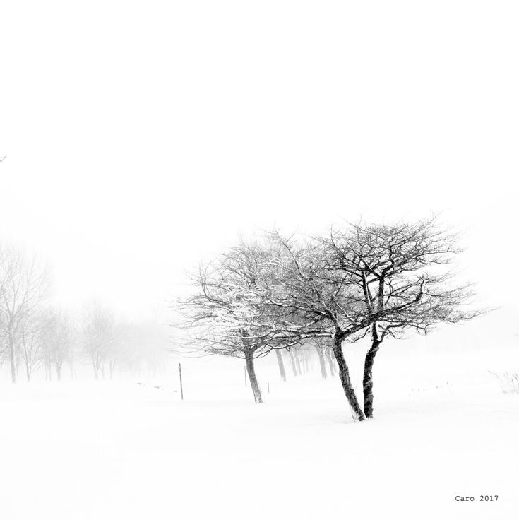 L'hiver...... tout simplement