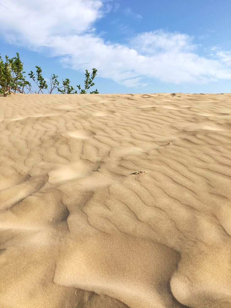 Check out the dunes at Sandbanks Provincial Park and other things to do in Prince Edward County, Ontario.
