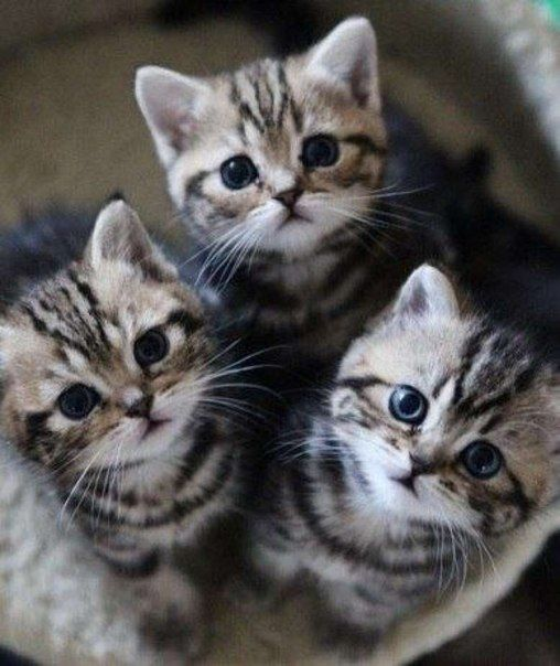 A trio of kittens looking super cute! I want to kiss them all!