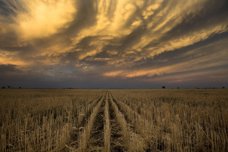 Crazy sunset over the harvested wheat field. Near Baradine NSW Australia