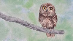 owl watercolor painting - YouTube