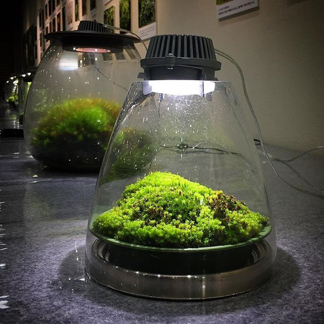 die besten 25 led lampe terrarium ideen auf pinterest terrarium lampe gartengestaltung. Black Bedroom Furniture Sets. Home Design Ideas