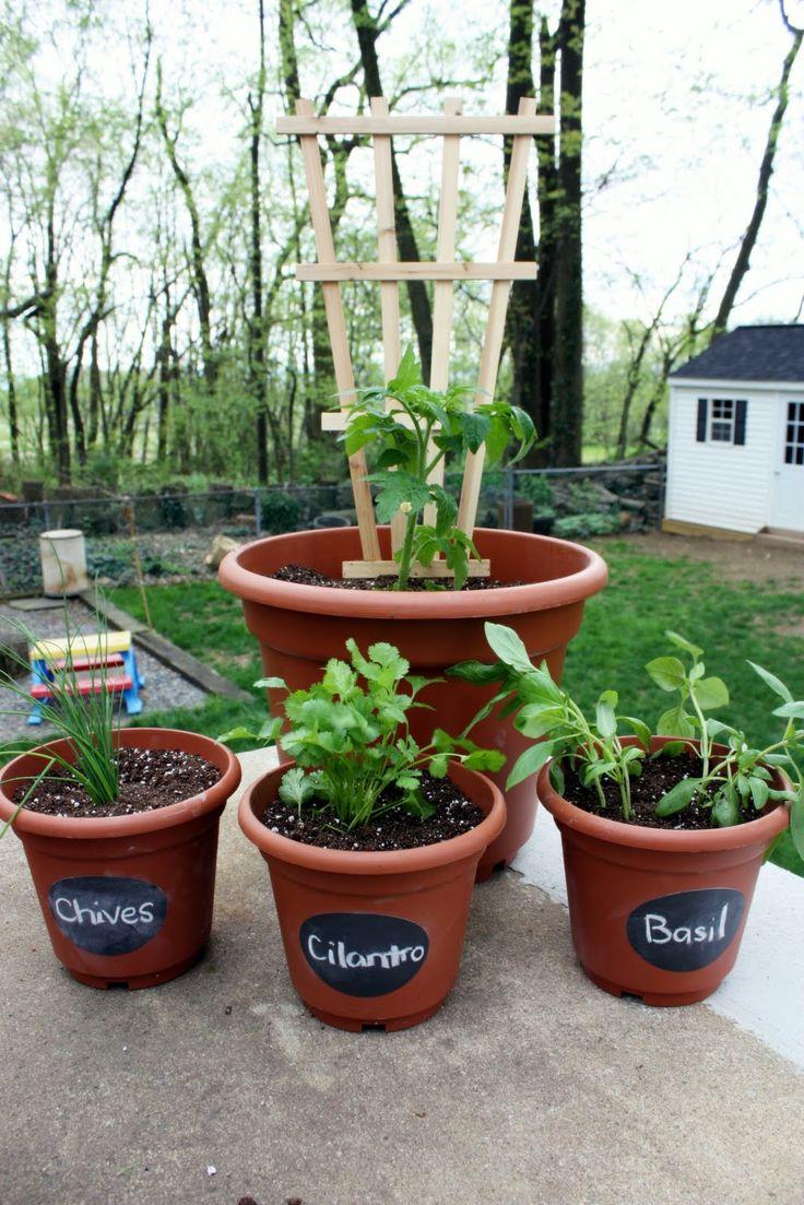 Container Gardening. Garden BulbsGarden PlantsBalcony ...