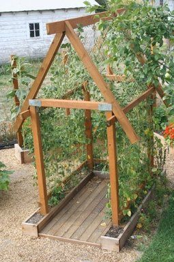Pea vine structure for easy pickin'