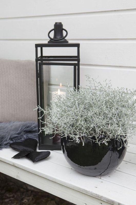 Det er stilig med sort sammen med grå planter som f.eks Calocephalus.