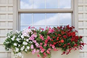 Signs of the Season: summer flowers in window boxes.