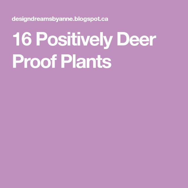 16 Positively Deer Proof Plants