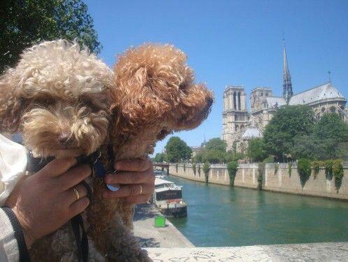 Sur le pont....., Paris - Giugno 2015