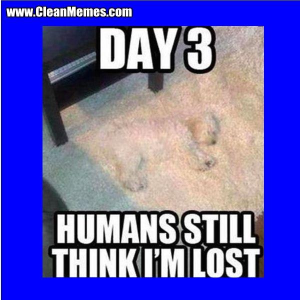 I Had A Good Day Dog Meme
