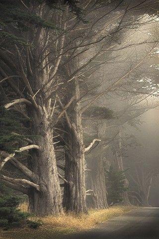 foggy lane by Paul Kozal