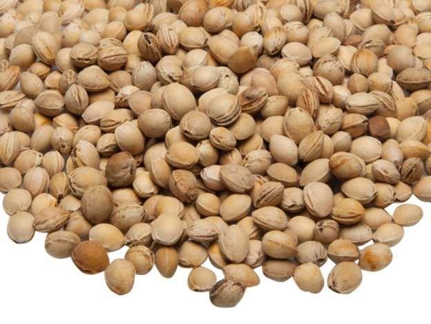 noyaux de cerises séchés, pour le rembourragede peluches ou la confection de coussins chauffants et de bouillottes sèches.Lesnoyaux peuvent être chauffés au micro-onde à 600 W pendant 1 minute, ou au four à 100 °C.