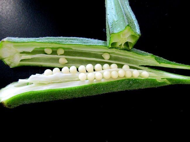okra - ibištek jedlý, prospešná zelenina pre diabetikov: udržať hladinu cukru v krvi v norme denne piť okrovú vodu: Umyte 4 stredne veľké okry a odrežte oba konce. Rozdeľte ich na dve polovice. Vložte ich do pohára s čistou vodou izbovej teploty a nechajte ich tak po celú noc. Predtým, ako ich vyberiete z vody, ich dobre postláčajte. Zvyšky okry vyhoďte a vodu vypite.